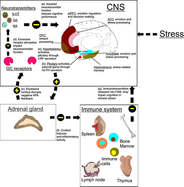 Biological and psychological markers of stress in humans