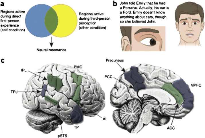 Empathy Gender Effects In Brain And Behavior Sciencedirect