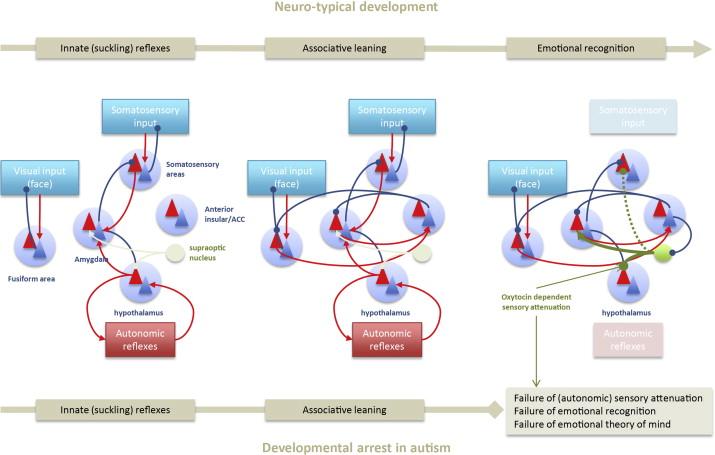Is Autism Failure Of Prediction >> Autism Oxytocin And Interoception Sciencedirect