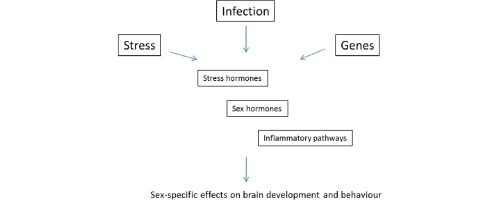 Sex Differences In Animal Models Of Schizophrenia Shed Light On The