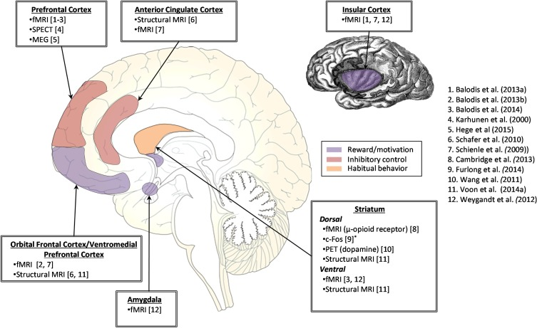 The neurobiological basis of binge-eating disorder