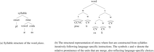 The growth of language: Universal Grammar, experience, and