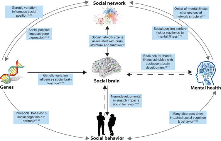 The Heart Of Matter Adolescent Brain >> Social Connectedness Mental Health And The Adolescent Brain