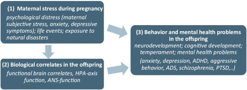 Prenatal developmental origins of behavior and mental health
