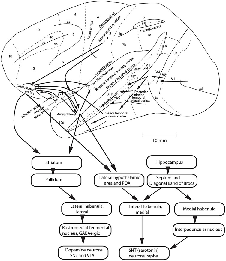 The Roles Of The Orbitofrontal Cortex Via The Habenula In Non Reward