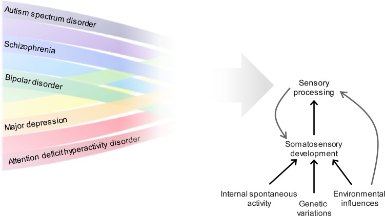 Multisensory cortical processing and dysfunction across the ...
