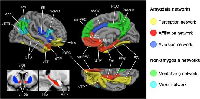 Brain Representations Of Social >> Social Brain Social Dysfunction And Social Withdrawal Sciencedirect