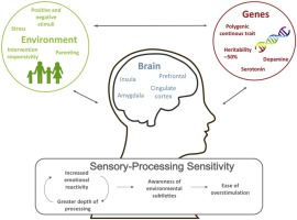 The Essence Of Sensory Processing >> Sensory Processing Sensitivity In The Context Of Environmental