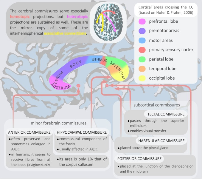 Brain functional connectivity in individuals with