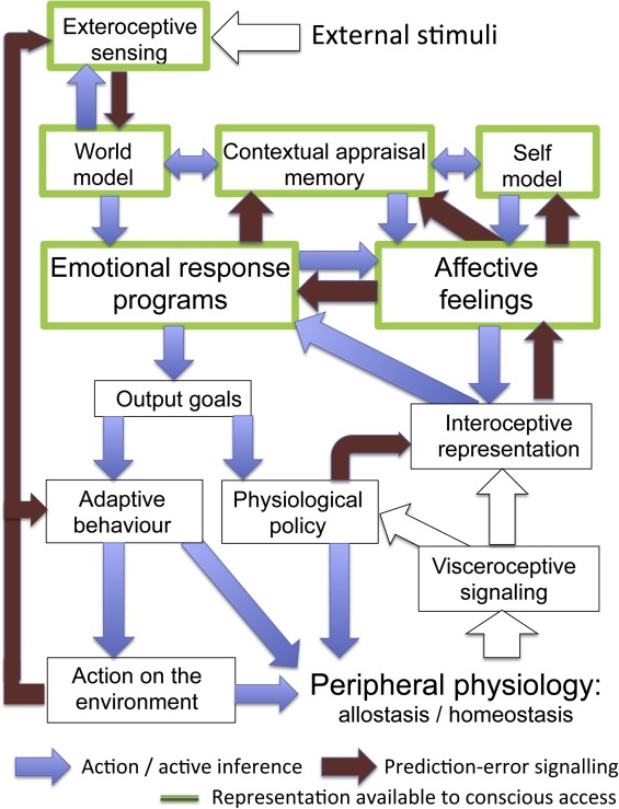 Physiological feelings - ScienceDirect