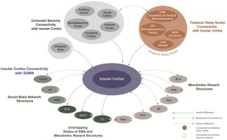An Insular View Of The Social Decision Making Network Sciencedirect