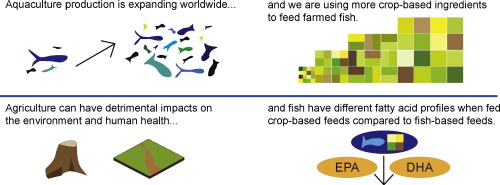Environmental health impacts of feeding crops to farmed fish