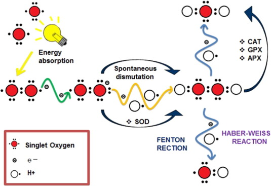 Environmental impact of estrogens on human, animal and plant