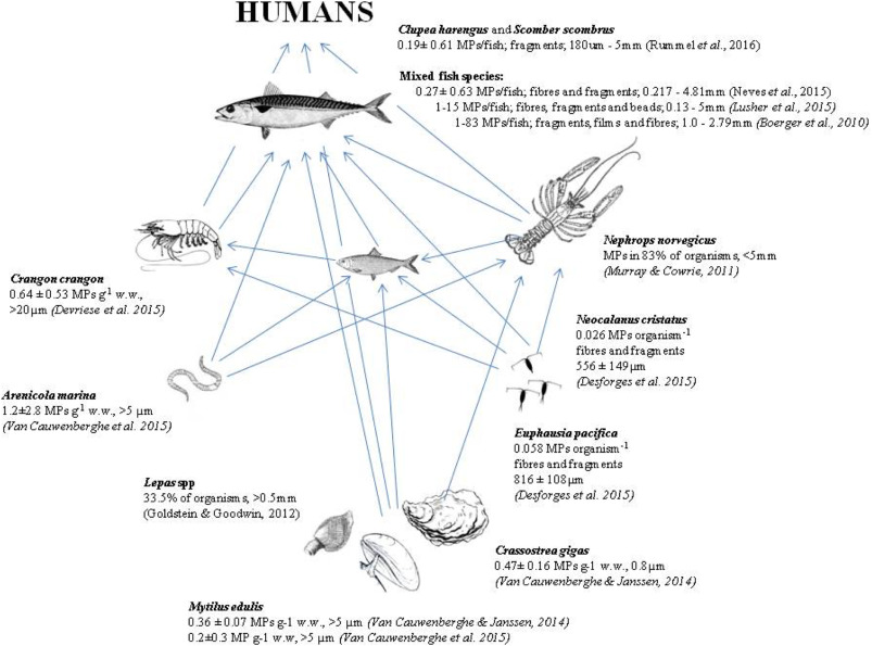 Trophic Transfer Of Microplastics And Mixed Contaminants In The