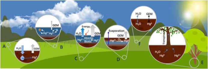 Mercury speciation, transformation, and transportation in soils