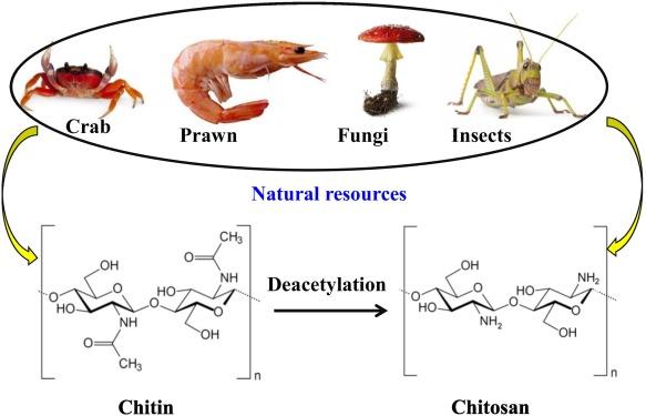 Production of bioplastic through food waste valorization