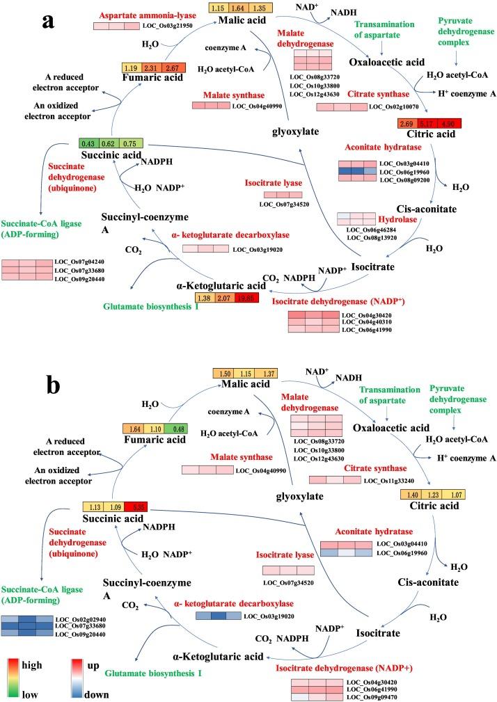 Metabolomics And Transcriptomics Reveal Defense Mechanism Of Rice