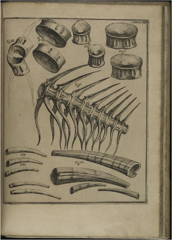 Projecting Nature: Agostino Scilla's Seventeenth-Century