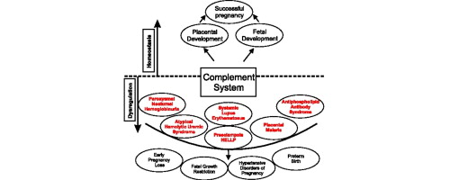 The Complement System Concept Map.The Complement System And Adverse Pregnancy Outcomes Sciencedirect