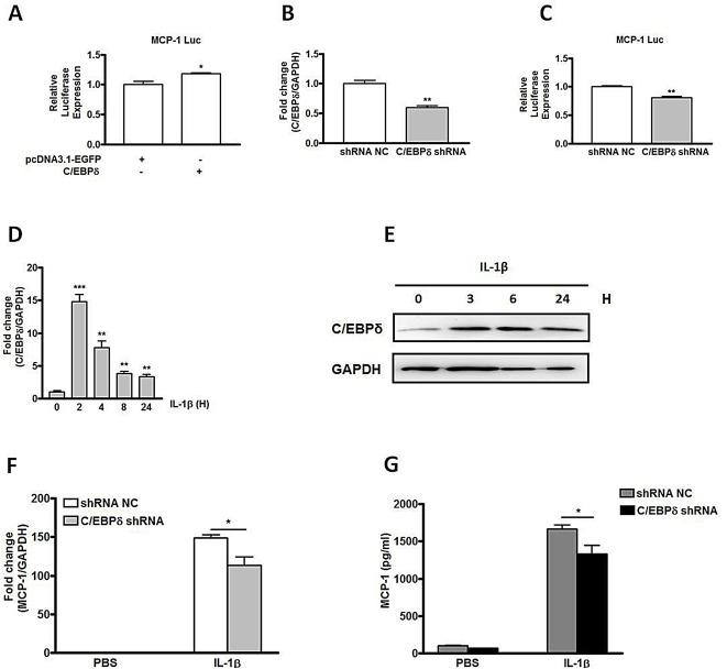 Involvement of multiple transcription factors in regulation