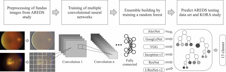 A Deep Learning Algorithm for Prediction of Age-Related Eye