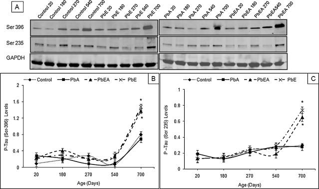 b1fb7ed701c Infantile postnatal exposure to lead (Pb) enhances tau expression in ...