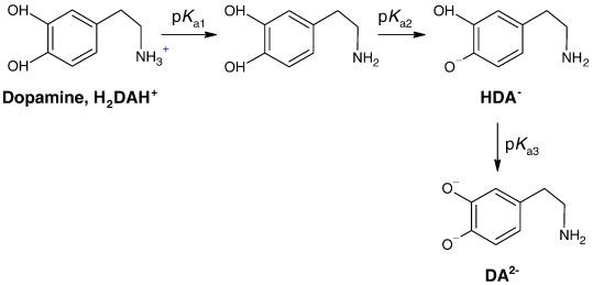 cu ii catalyzed oxidation of dopamine in aqueous solutions