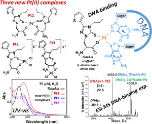 Synthesis, DNA binding studies, and antiproliferative