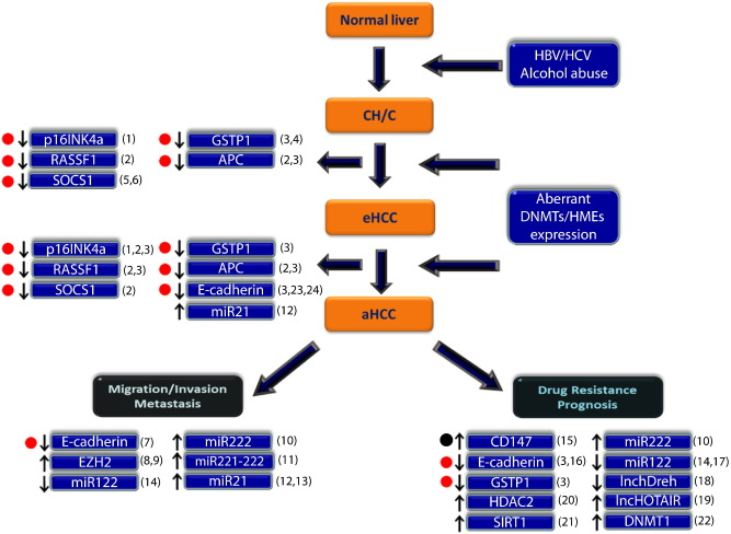 Epigenetic therapy as a novel approach in hepatocellular