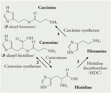 Non sedating anti-h1 antihistamines and dementia