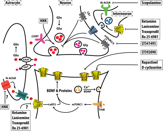 The neurobiology of depression, ketamine and rapid-acting antidepressants:  Is it glutamate inhibition or activation? - ScienceDirect