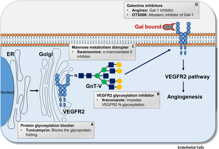 Glycosylation as new pharmacological strategies for diseases