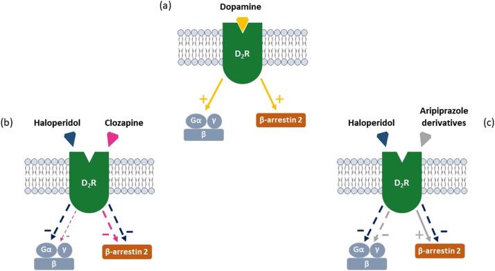 Molecular targets of atypical antipsychotics: From mechanism
