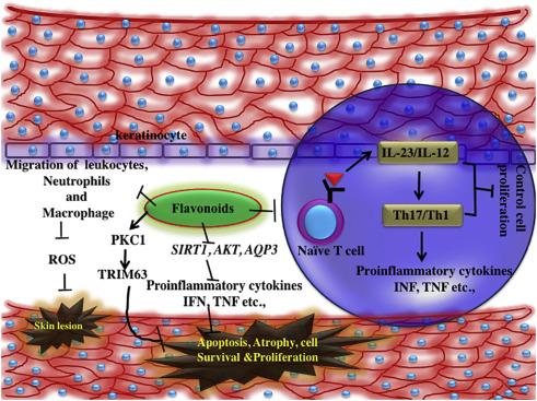 The role of flavonoids in autoimmune diseases: Therapeutic updates