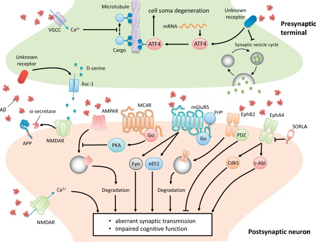 Synaptic dysfunction in Alzheimer's disease: Mechanisms and