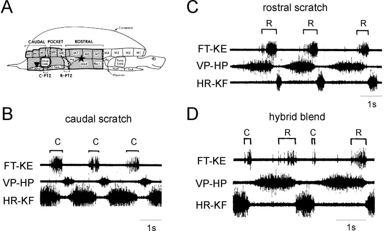 Coordination and localization in spinal motor systems - ScienceDirect