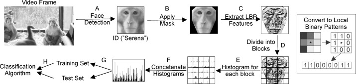 Automated face recognition of rhesus macaques - ScienceDirect