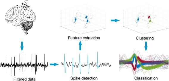 Unsupervised and real-time spike sorting chip for neural signal