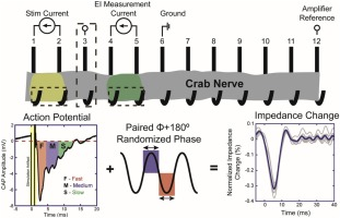 Optimisation of bioimpedance measurements of neuronal