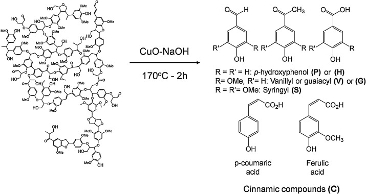 Comparison of thermochemolysis and classical chemical