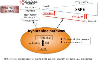 Elevated quinolinic acid levels in cerebrospinal fluid in subacute ...