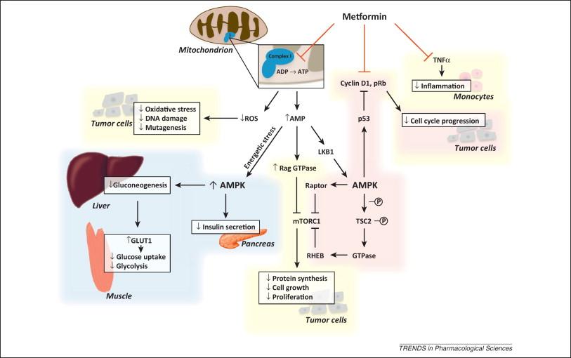 misoprostol x ocitocina