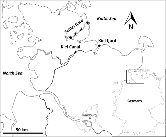 Age Based Stock Assessment Of The European Eel Anguilla Anguilla