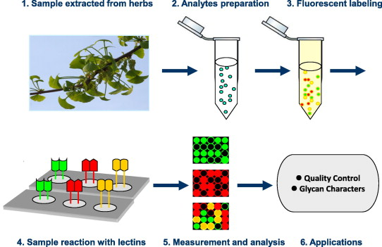 1 s2.0 S0165993613001878 gr5 carbohydrates analysis in herbal glycomics sciencedirect  at readyjetset.co