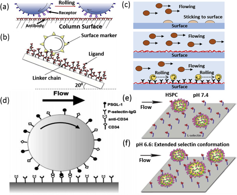 Label-free microfluidic stem cell isolation technologies - ScienceDirect
