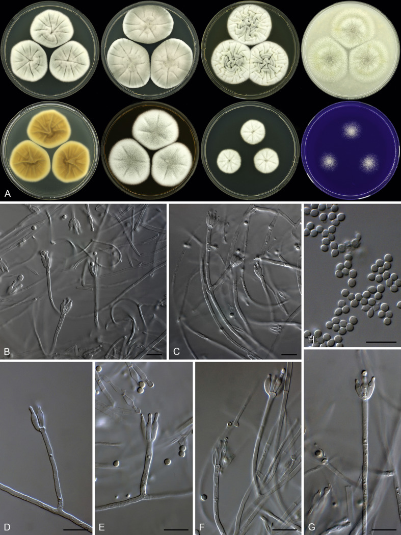 Aspergillus penicillium and talaromyces isolated from house dust aspergillus penicillium and talaromyces isolated from house dust samples collected around the world sciencedirect pooptronica