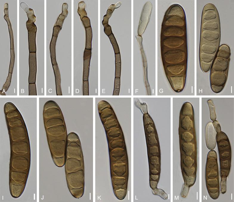 Paraziták kezelése orenburgban