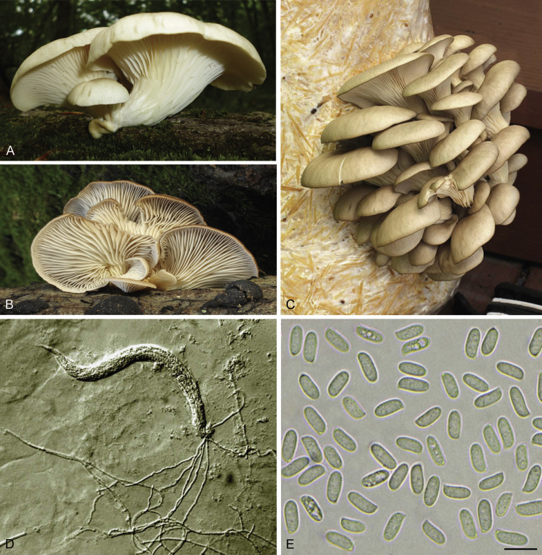 The good, the bad and the tasty: The many roles of mushrooms