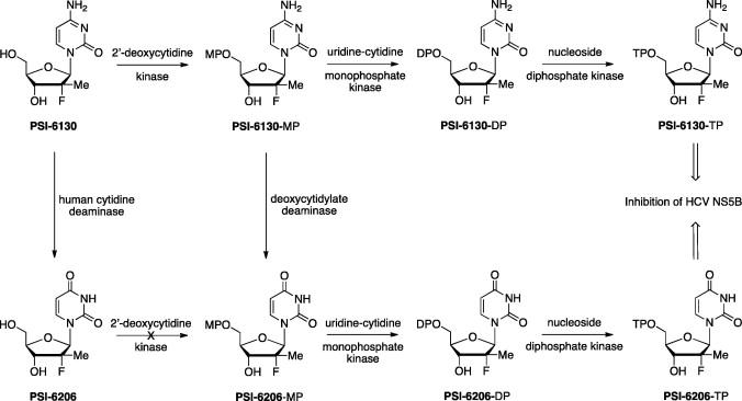 Chutes and ladders in hepatitis C nucleoside drug development