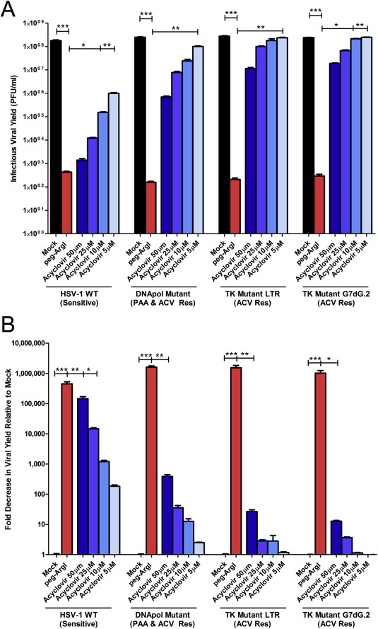 Development and evaluation of a host-targeted antiviral that